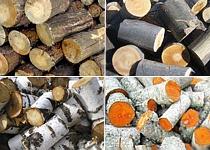 дрова из разных пород деревьев