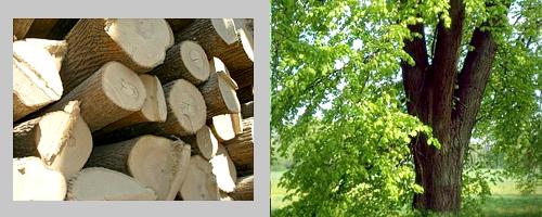 липовые дрова